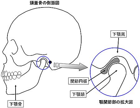 安定した良い顎の位置/中心位図