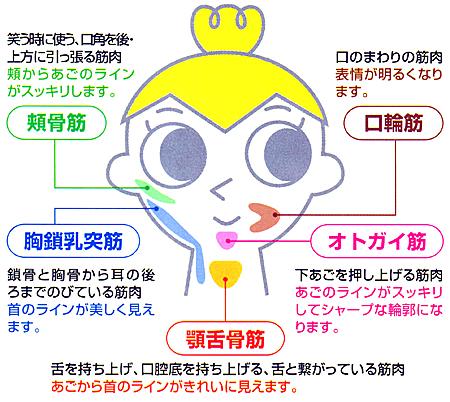 パタカラ/口の筋力増強用品顔筋