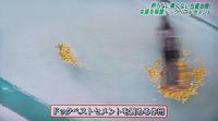 ドックベストセメント治療東京テレビ8