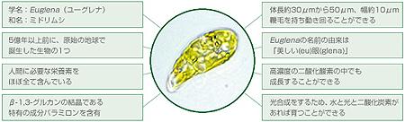 ミドリムシのちから/ミドリムシサプリメント特徴
