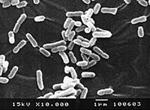 歯科医院感染予防POICウォーター細菌
