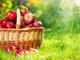 歯や歯茎、口の健康に良い食べ物