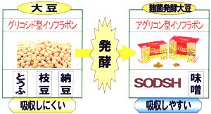 歯槽膿漏,歯周病,口臭改善サプリメント発酵