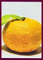 歯槽膿漏,歯周病,口臭改善サプリメント柚子