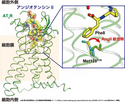 新型コロナウイルス初期症状/味覚障害/味覚異常/歯周病口腔ケア/ACEⅡ/アンジオテンシン